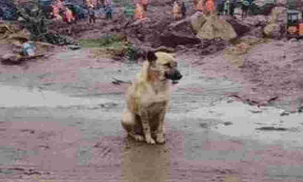 மூணார் நிலச்சரிவு ஏற்பட்ட இடத்தில் தன் முதலாளிக்காக காத்திருக்கும் நாய்