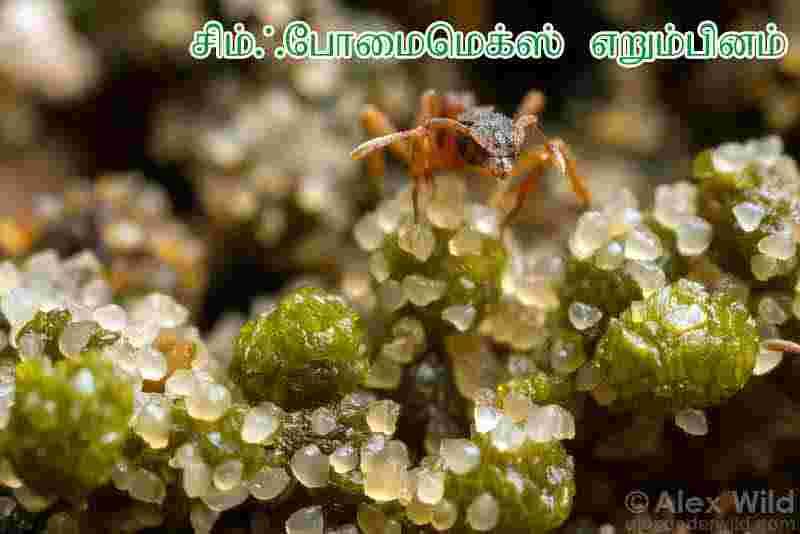 பூச்சிகளின் நுண்ணுயிரிகள் மூலம் நுண்ணுயிர் எதிர்ப்பொருள்